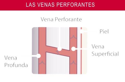 Conexión sistema venoso profundo con sistema venoso superficial a través de las venas perforantes