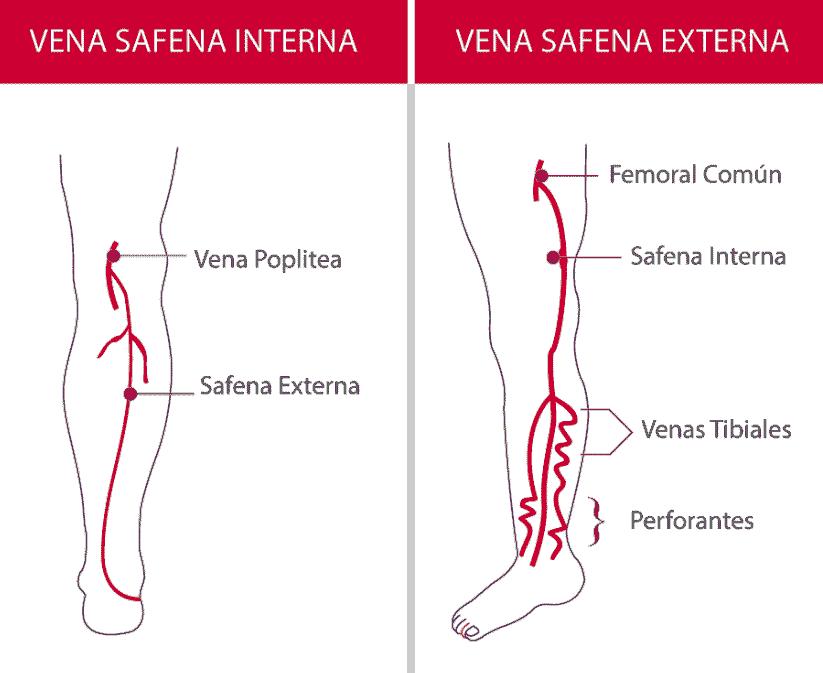 Las venas de los miembros inferiores - Instituto Vascular Salarich